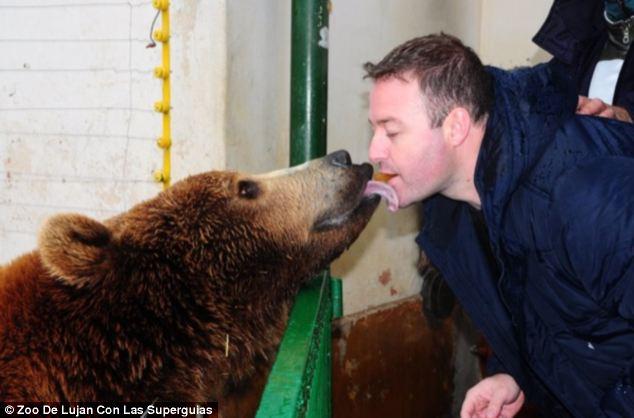 A medvét, ami épp egy falat ételt vesz el egy látogató szájából, két hónapos kora óta nevelik az állatkertben.