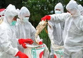 madárinfluenza