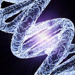 DNS adattároló