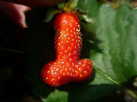 nagy szép pénisz