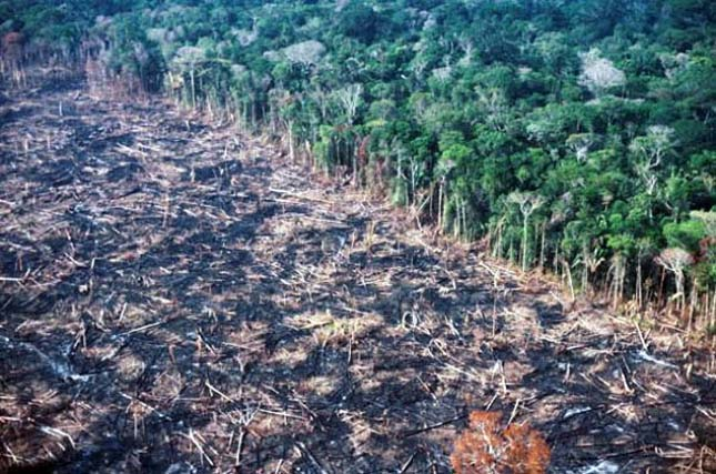 a look at the importance of tropical rainforests and concerns over their destruction We all know that keeping the world's remaining tropical forests standing is for over a year, rainforest action network and the destruction of rainforests.