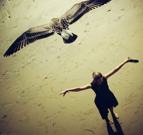 beach-bird-color-accent-composite-girl-photography-Favim.com-40872_original