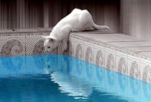 cat-jumps-into-water