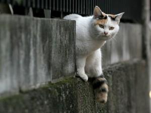 city_cat_20d-000898X