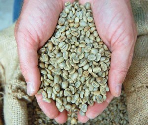 Unroasted_Coffee_Beans_new_t479