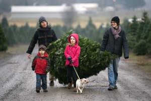 karácsonyfa-vásárlása