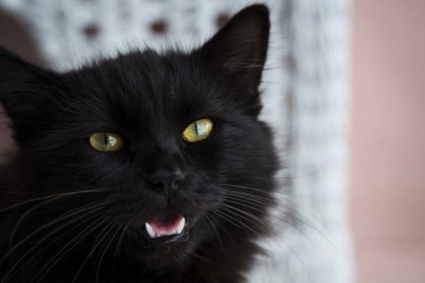 Black-cat-3068455