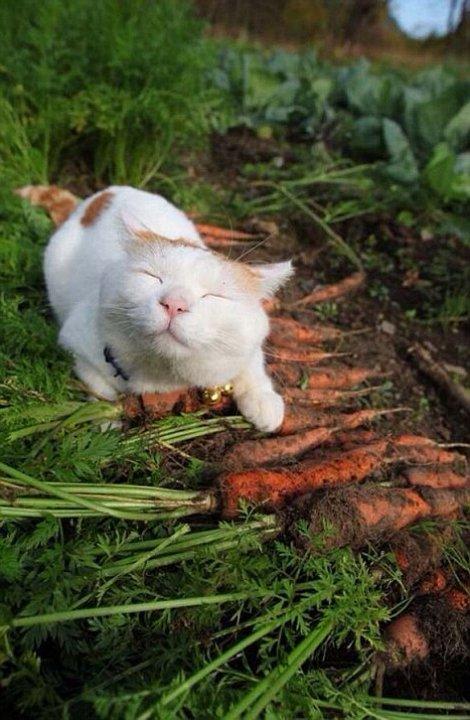 Zen-macska - A Boldogság Művészete