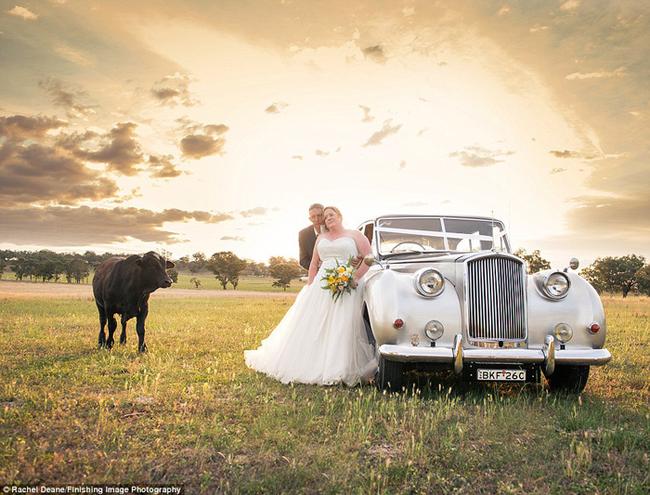 bull-wedding2