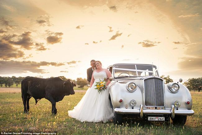 bull-wedding3