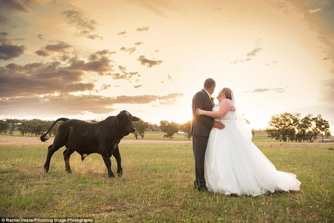 bull-wedding4