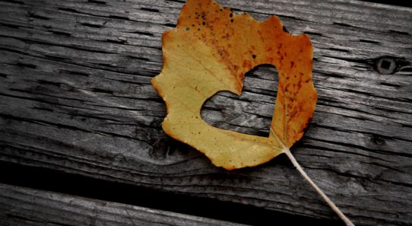i_love_autumn-wide1-730x400