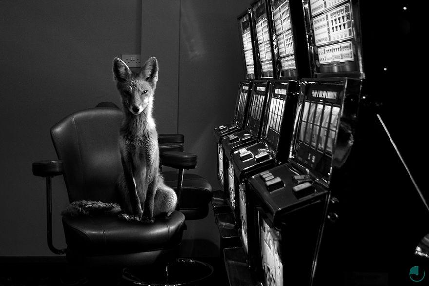 Fox-Small__880