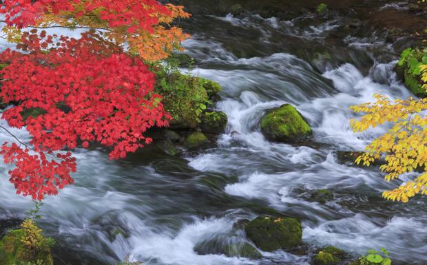 Ravine and autumn leaves