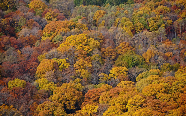 Aerial view of Red Leaves, woods