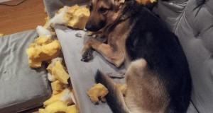 kutyák2