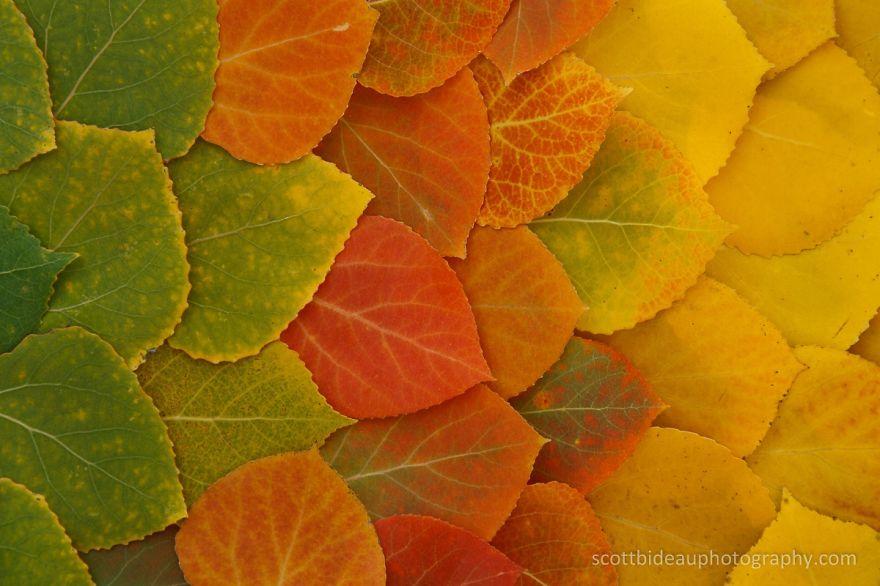 Fall Transition
