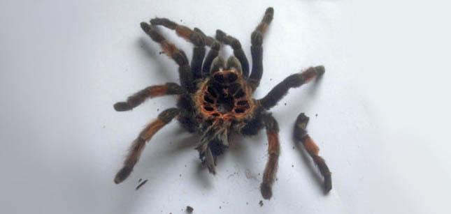 csodálatos pók ember egyetlen link