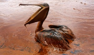 BP katasztrófa