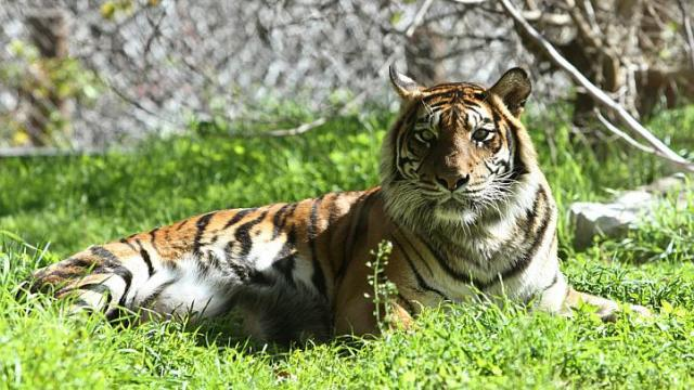tiger3012e
