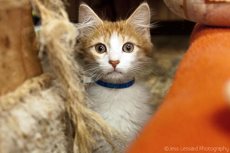 My-Photos-of-Rescue-Kittens-At-the-Largest-No-Kill-Cat-Sanctuary-in-California-11__880