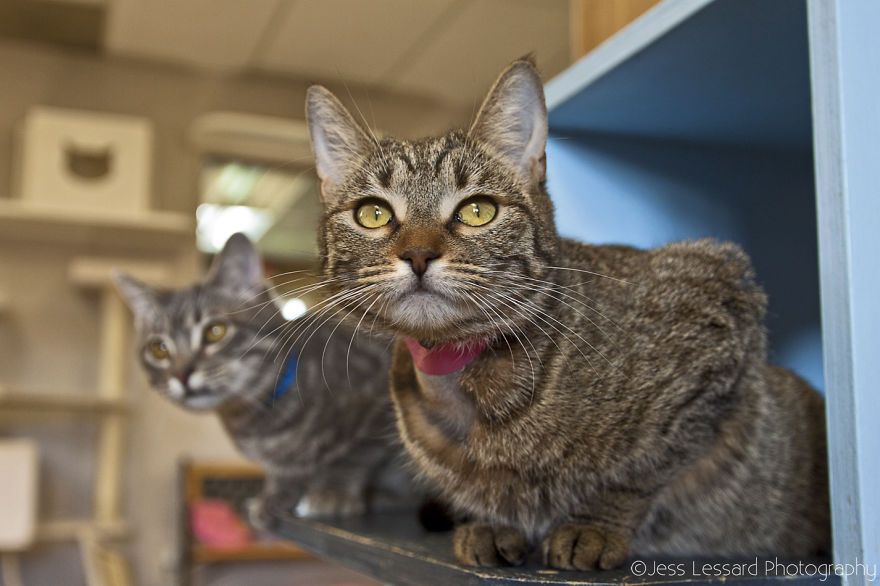 My-Photos-of-Rescue-Kittens-At-the-Largest-No-Kill-Cat-Sanctuary-in-California-12__880
