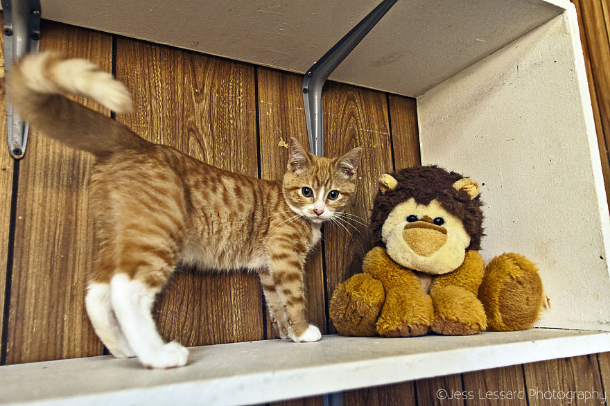 My-Photos-of-Rescue-Kittens-At-the-Largest-No-Kill-Cat-Sanctuary-in-California-13__880