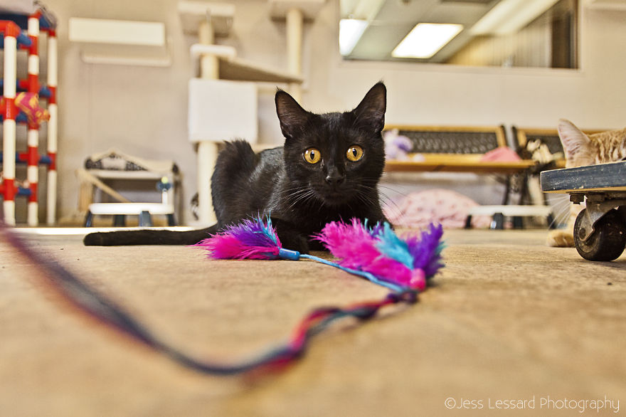 My-Photos-of-Rescue-Kittens-At-the-Largest-No-Kill-Cat-Sanctuary-in-California-14__880
