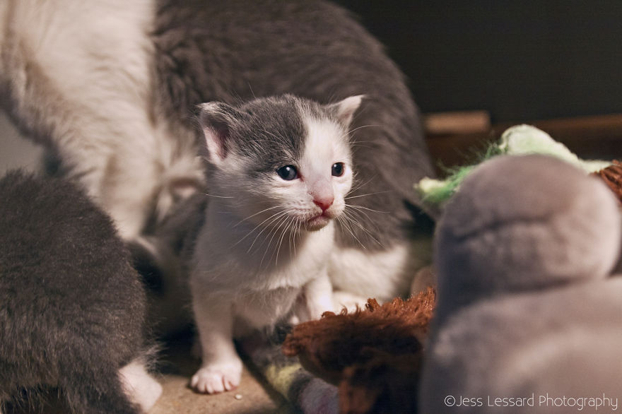 My-Photos-of-Rescue-Kittens-At-the-Largest-No-Kill-Cat-Sanctuary-in-California-16__880
