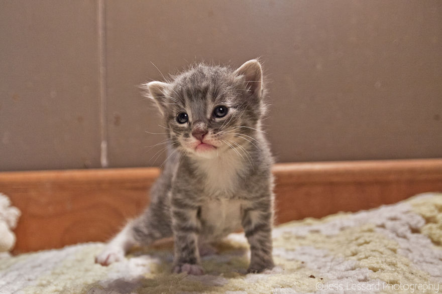 My-Photos-of-Rescue-Kittens-At-the-Largest-No-Kill-Cat-Sanctuary-in-California-17__880