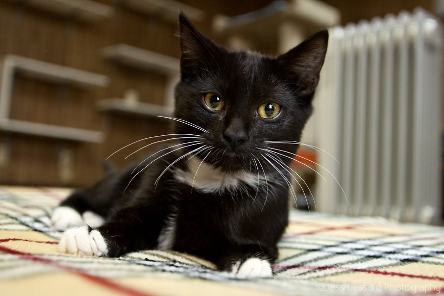 My-Photos-of-Rescue-Kittens-At-the-Largest-No-Kill-Cat-Sanctuary-in-California-1__880