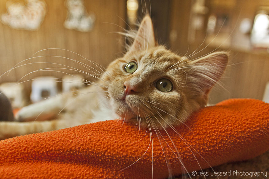 My-Photos-of-Rescue-Kittens-At-the-Largest-No-Kill-Cat-Sanctuary-in-California-5__880