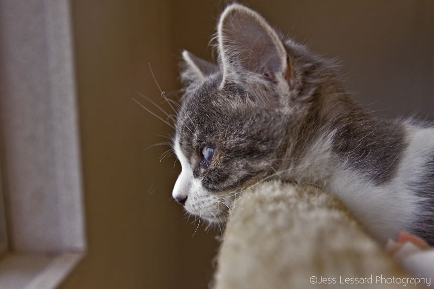 My-Photos-of-Rescue-Kittens-At-the-Largest-No-Kill-Cat-Sanctuary-in-California-6__880