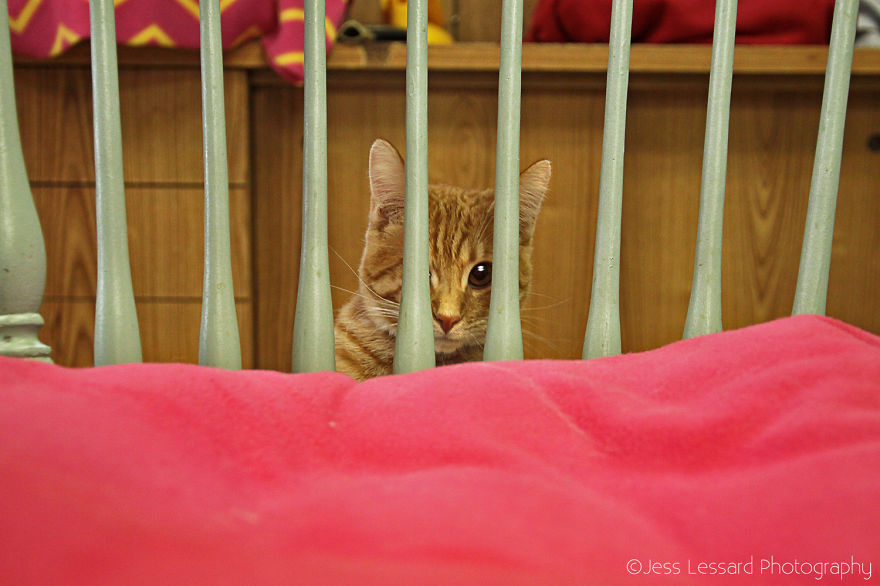 My-Photos-of-Rescue-Kittens-At-the-Largest-No-Kill-Cat-Sanctuary-in-California-8__880