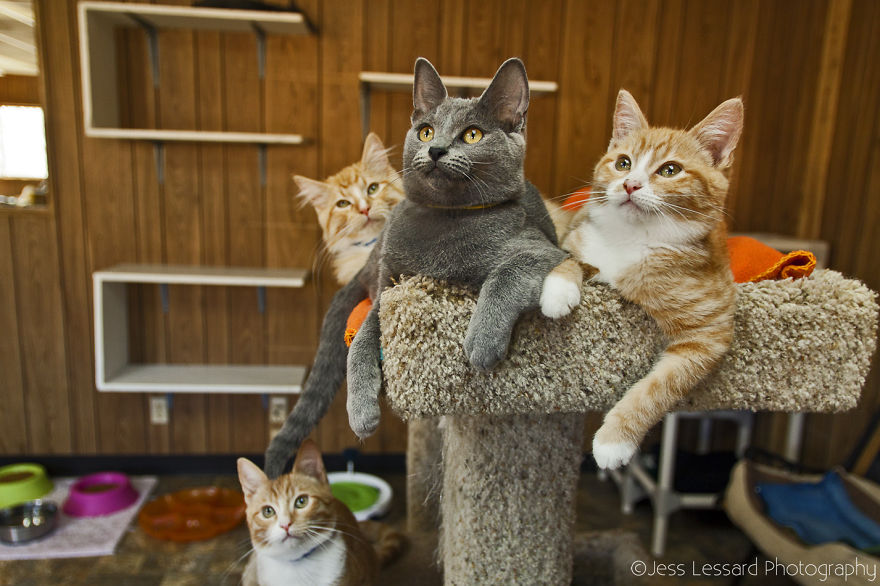 My-Photos-of-Rescue-Kittens-At-the-Largest-No-Kill-Cat-Sanctuary-in-California-__880
