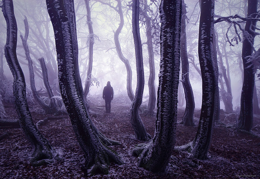 beautiful-mysterious-forests-6__880