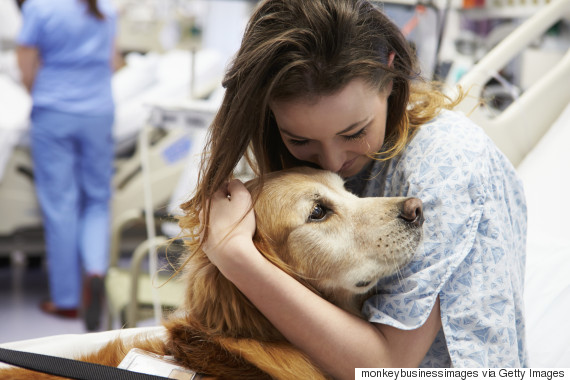 o-THERAPY-DOG-570