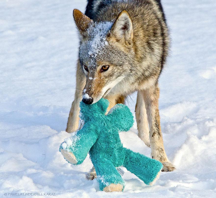 toy-thief-10__880