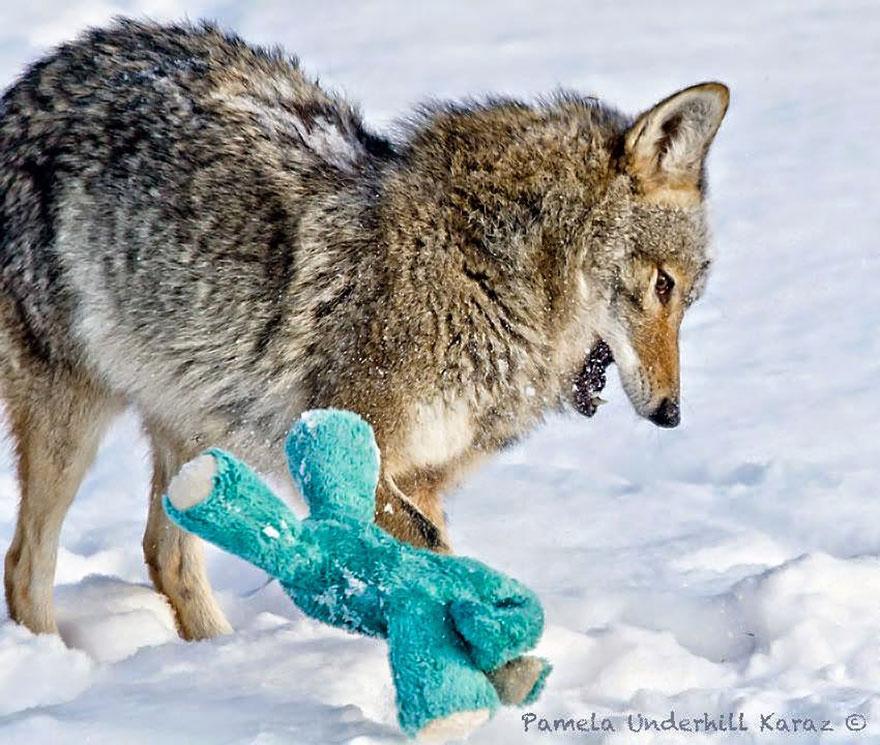 toy-thief-12__880