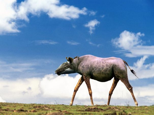 HYBRID ANIMALS PHOTOSHOP