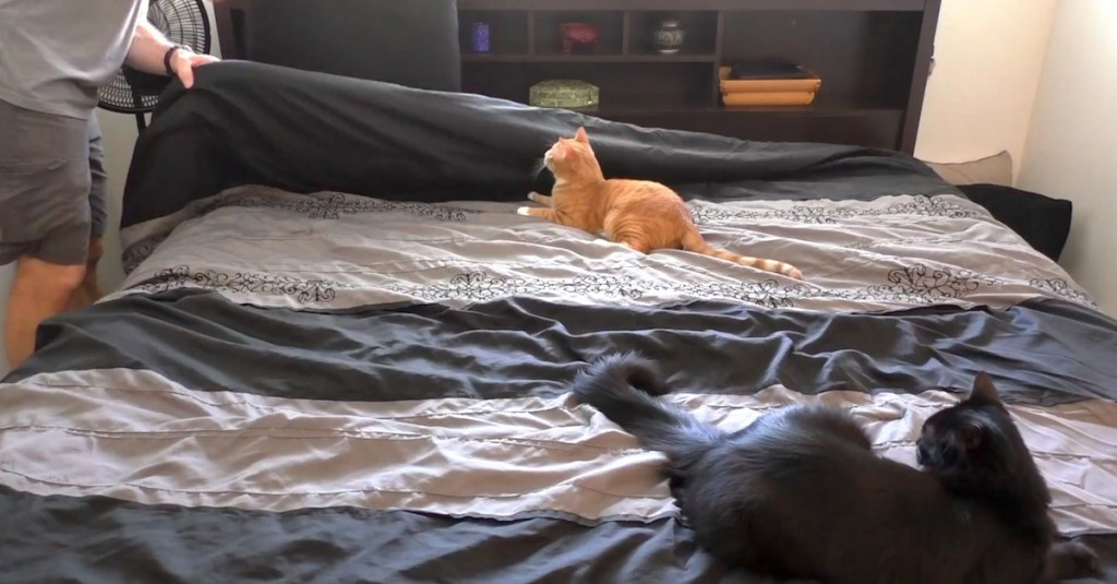 Making-Bed-With-Cats-Around-1