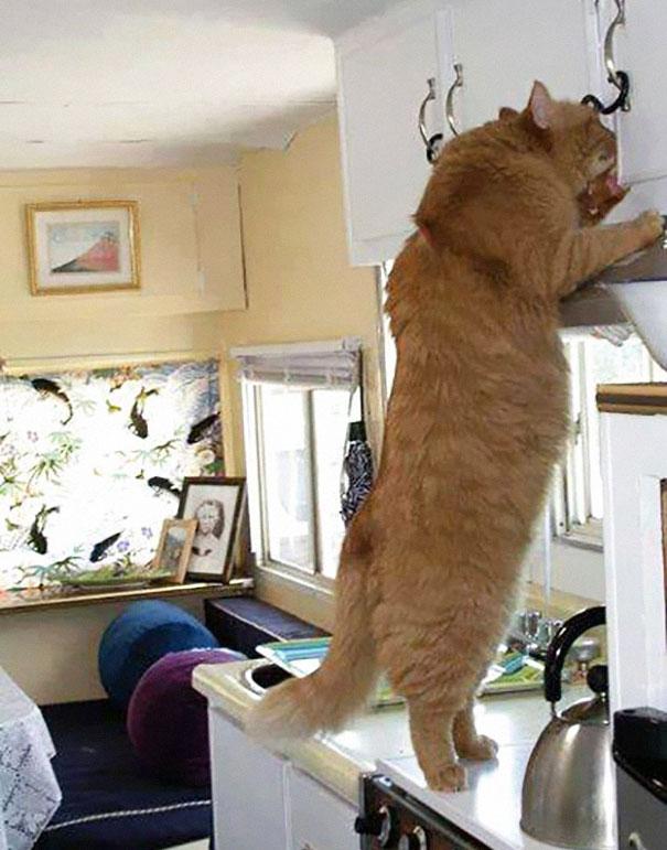 huge-cats-13__605