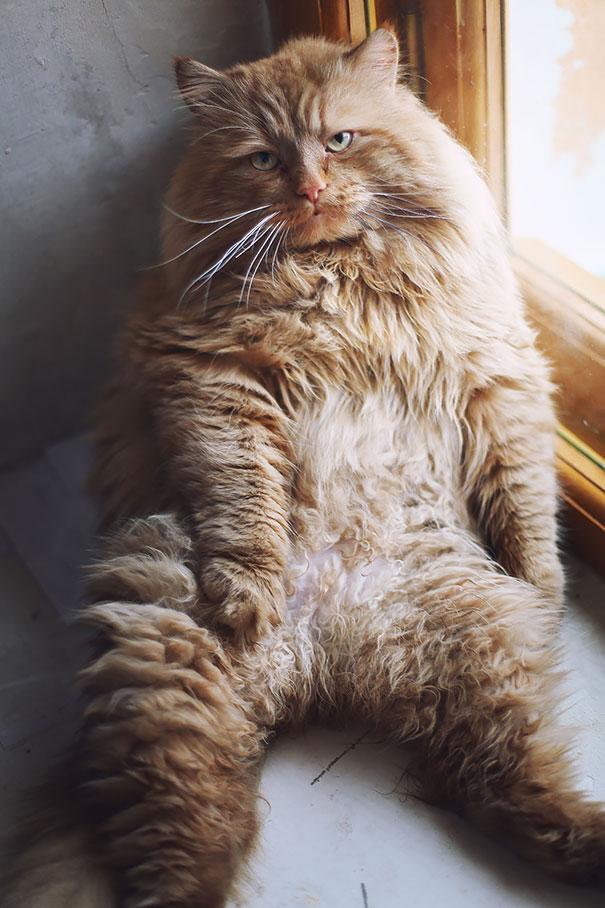 huge-cats-16__605