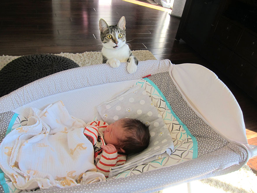owners-forgot-tell-cat-about-baby-roxy-1