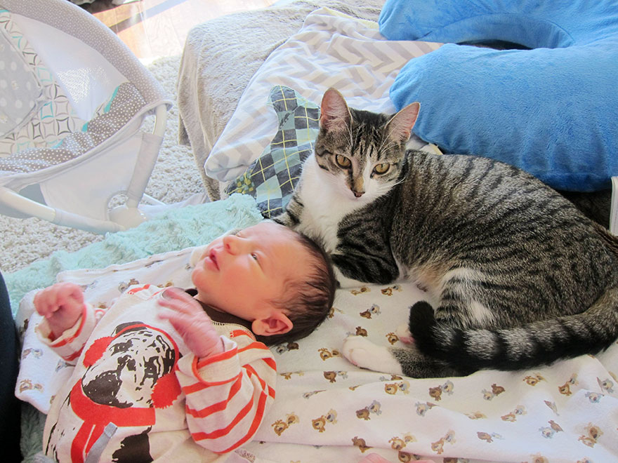 owners-forgot-tell-cat-about-baby-roxy-3