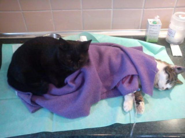 the_incredible_nursing_cat_640_06