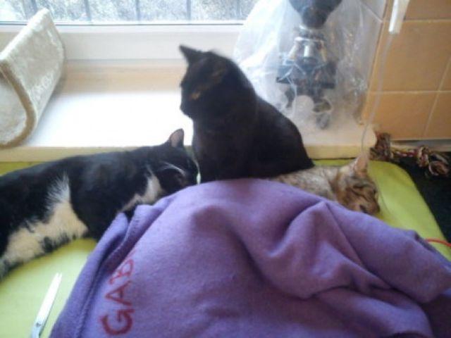 the_incredible_nursing_cat_640_08