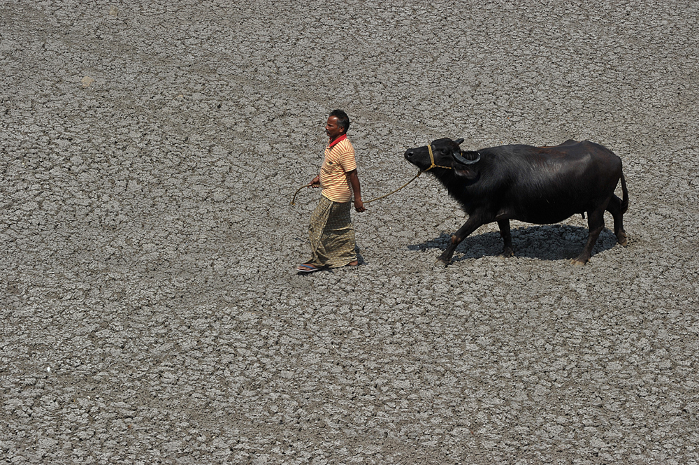 An Indian farmer walks with his buffalo on the dry bed of a river at Bibi Nagar in Nalgonda District, some 40 kilometers from Hyderabad on March 23, 2015.  AFP PHOTO/ Noah SEELAM