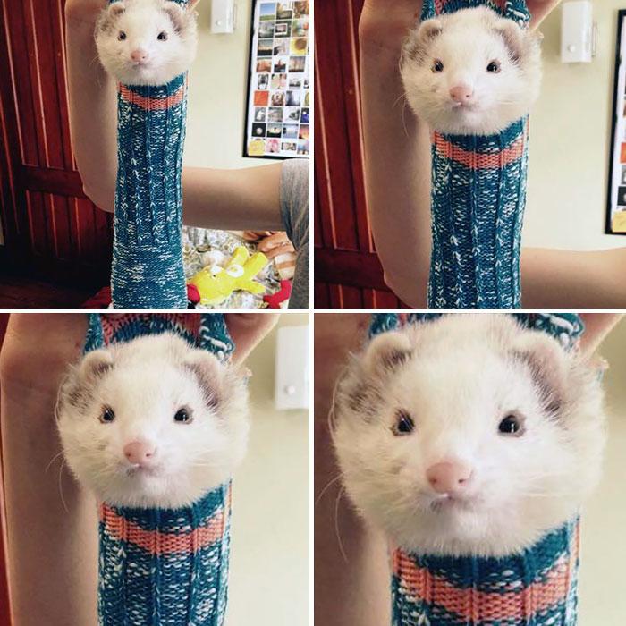 cute-funny-ferrets-10__700