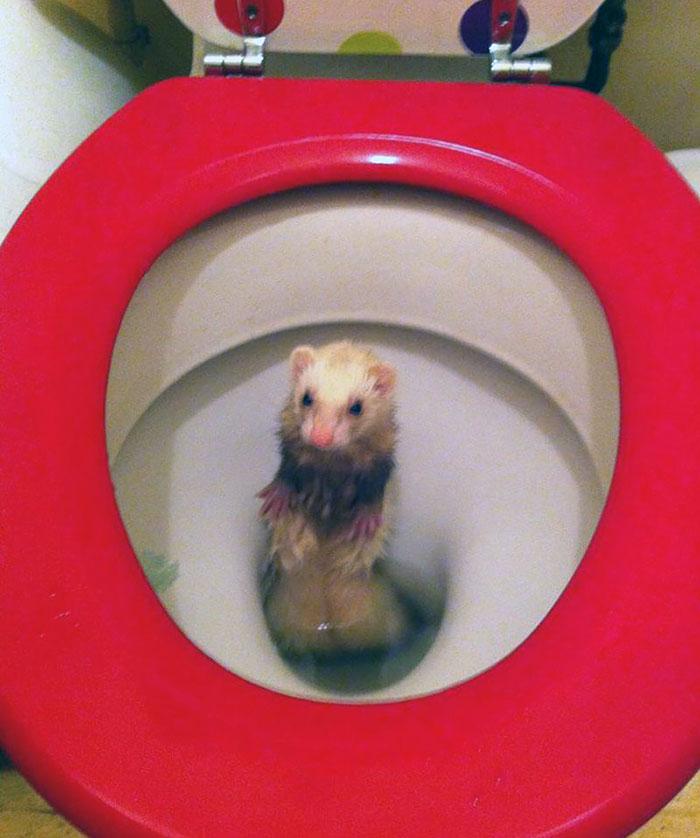 cute-funny-ferrets-19__700